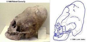 skulls05